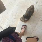Naboens kat, men som nu er blevet vores! Vi kalder hende Angie.